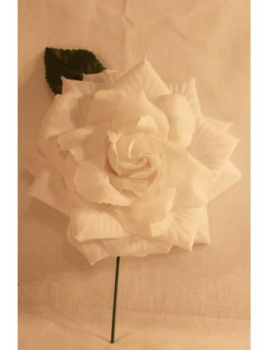 Roses à tige